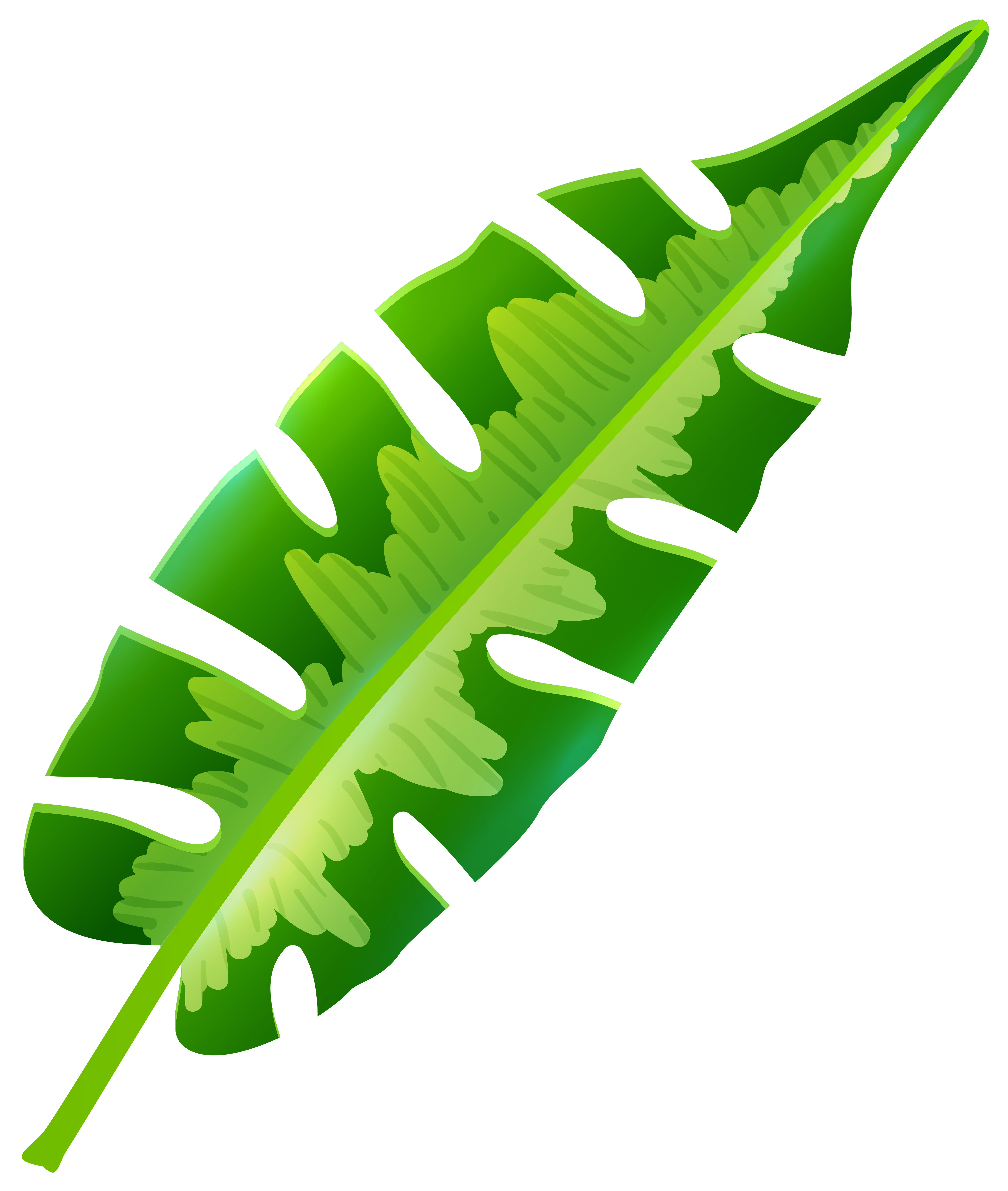 Free tropical leaf.