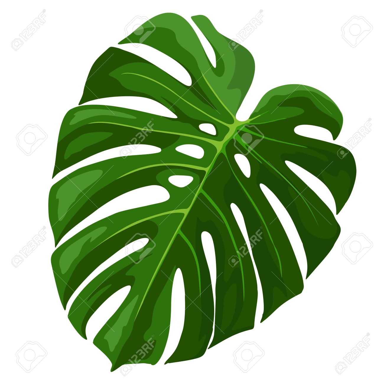 Tropical leaves clipart.