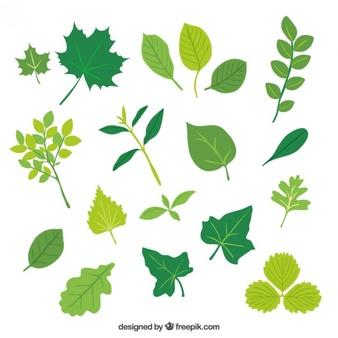 Leaf vectors photos.