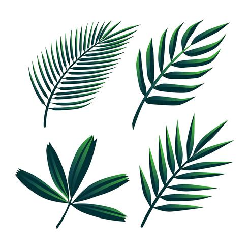 Tropical Palm Green Leaves Clipart Set Vector