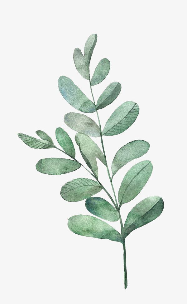 Watercolor Leaves PNG, Clipart, Cartoon, Decoration, Green