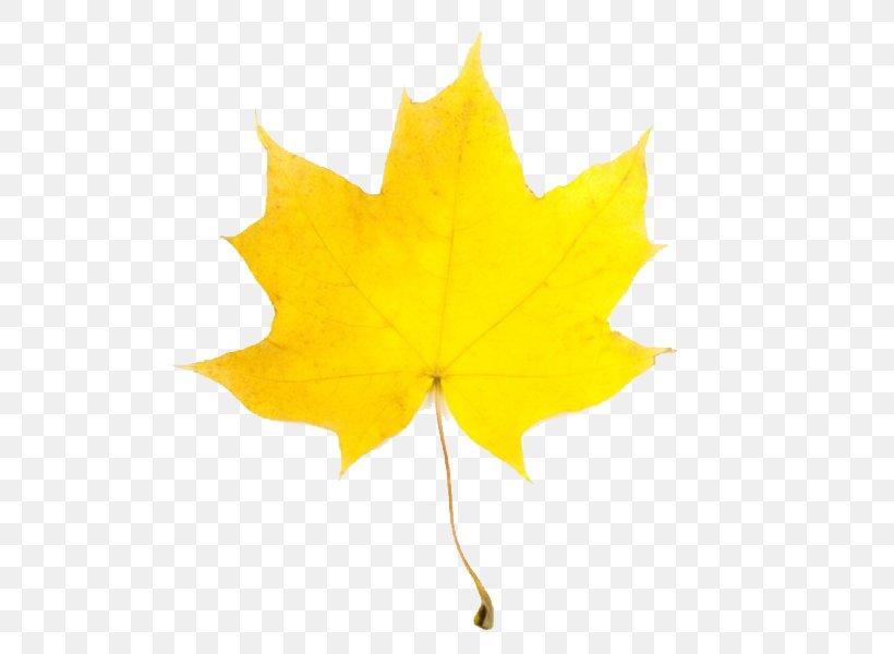 Leaf Yellow Maple Autumn Clip Art, PNG,
