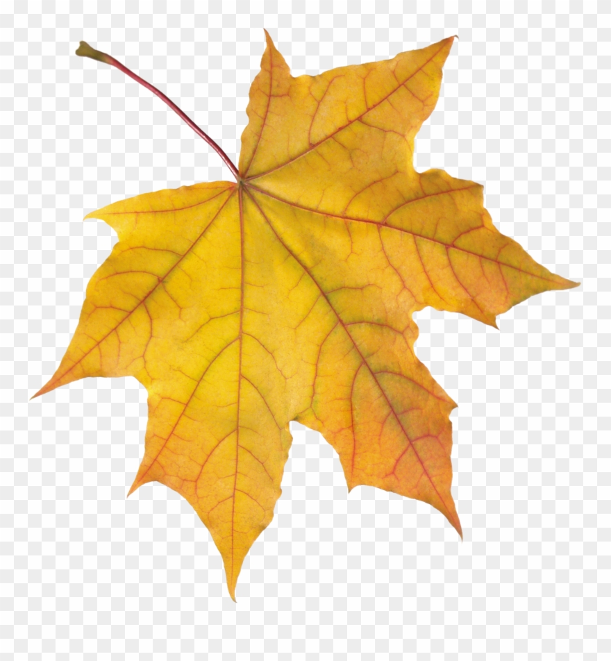Yellow Leaves, Stock Pictures, Rug Hooking, Autumn