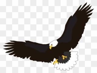 Bird,Eagle,Golden eagle,Bald eagle,Bird of prey,Accipitridae