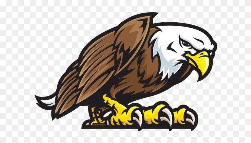 Bird,Eagle,Bald eagle,Golden eagle,Bird of prey,Beak
