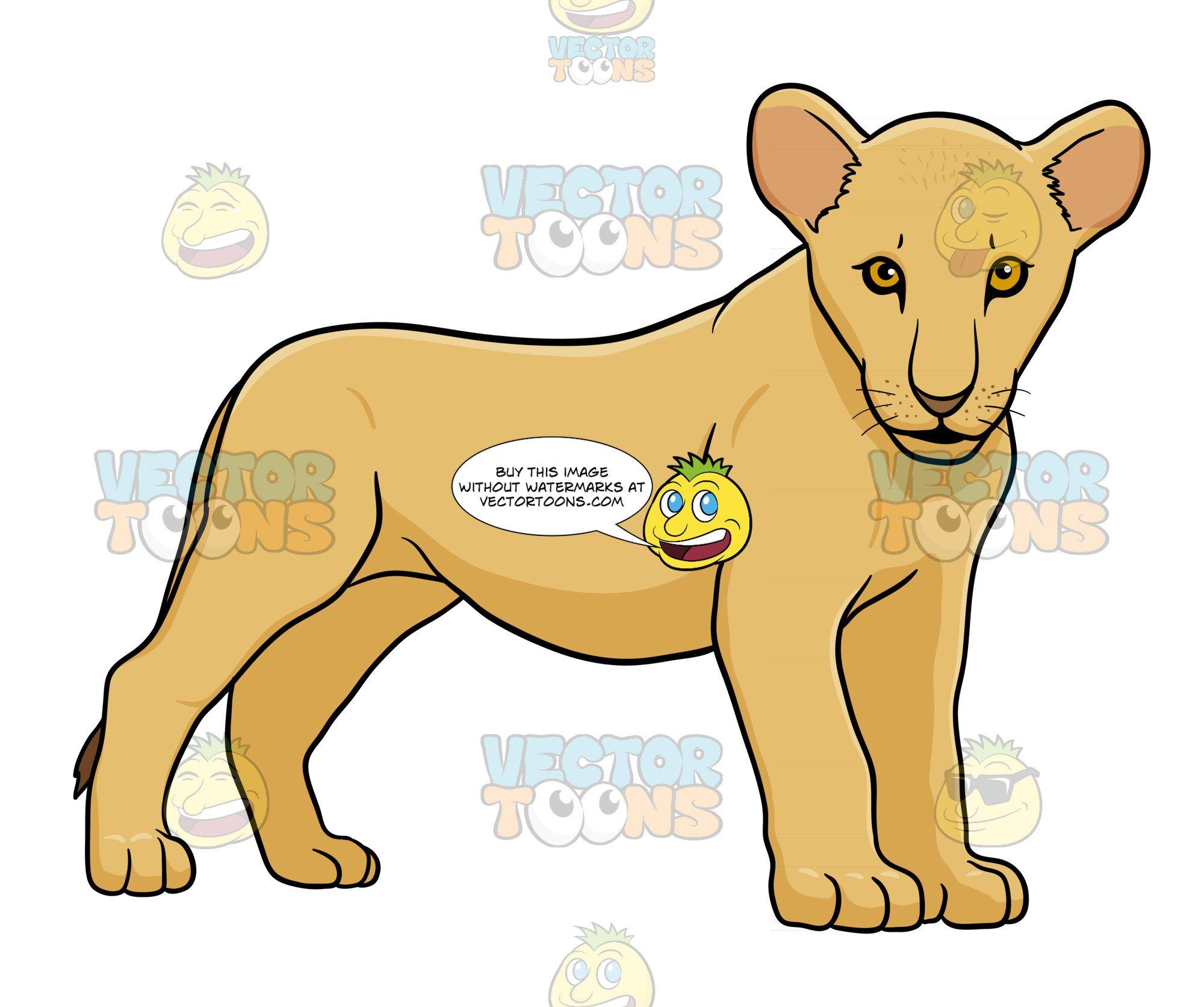 Lion cub standing.