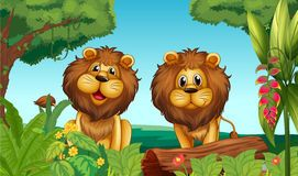Two lions the.