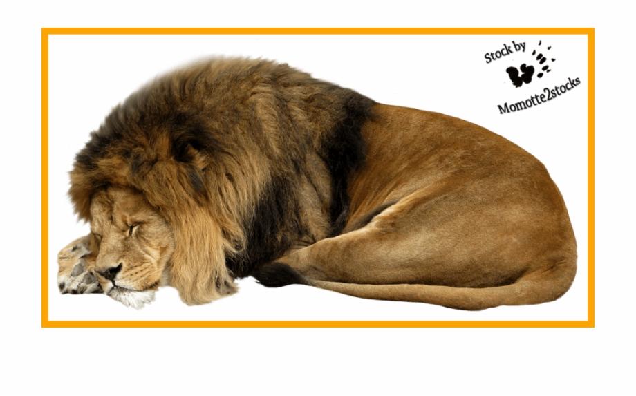 Lion clipart sleep.