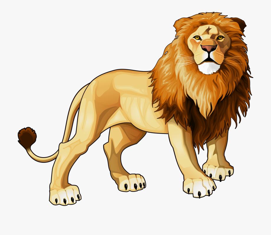 Lion png clipart.