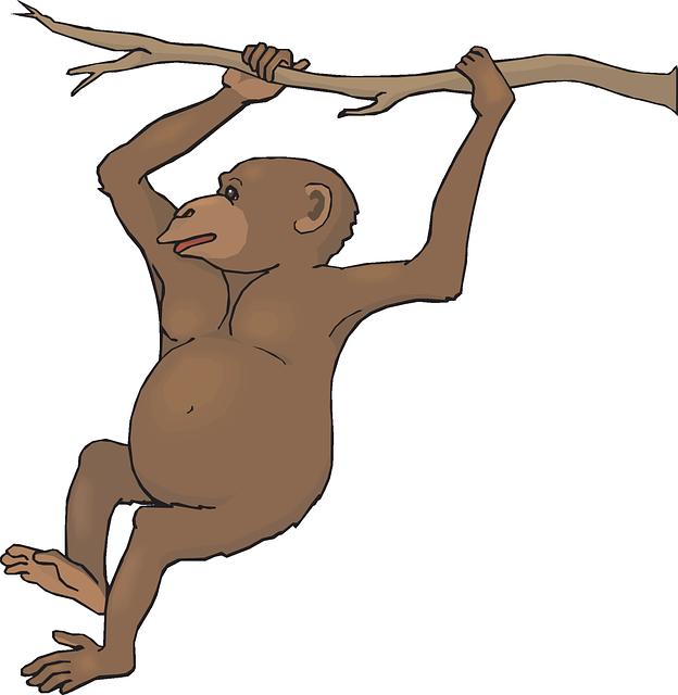 Realistic monkey clipart.