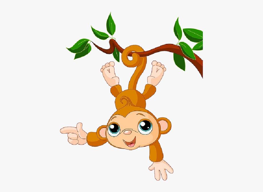 Monkey images zoo.