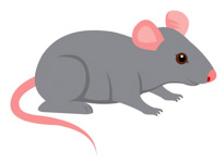 Gray mouse pink.