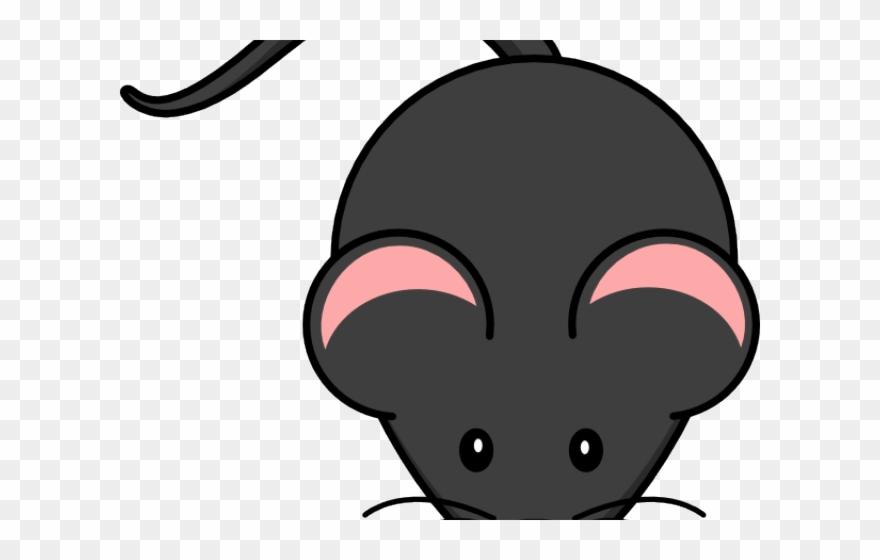 Mice clipart rat.