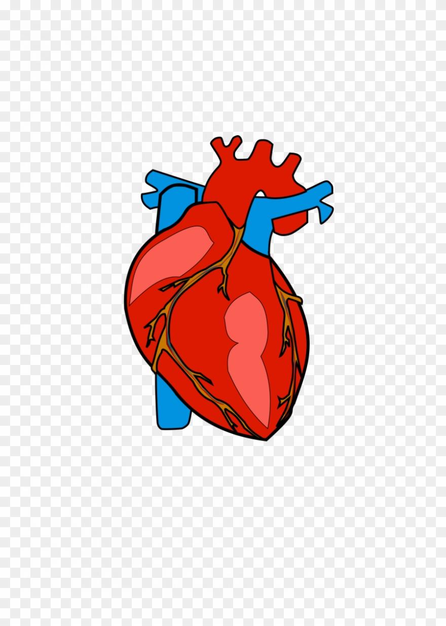 Body heart clipart.