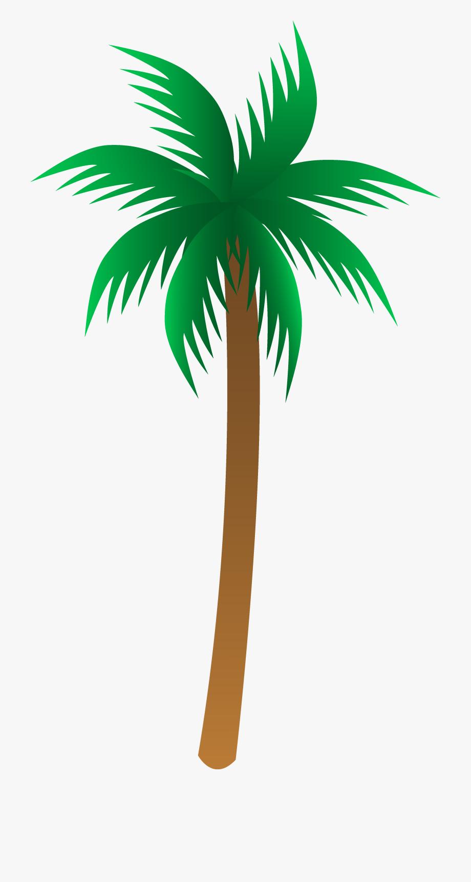 Vector palm tree.
