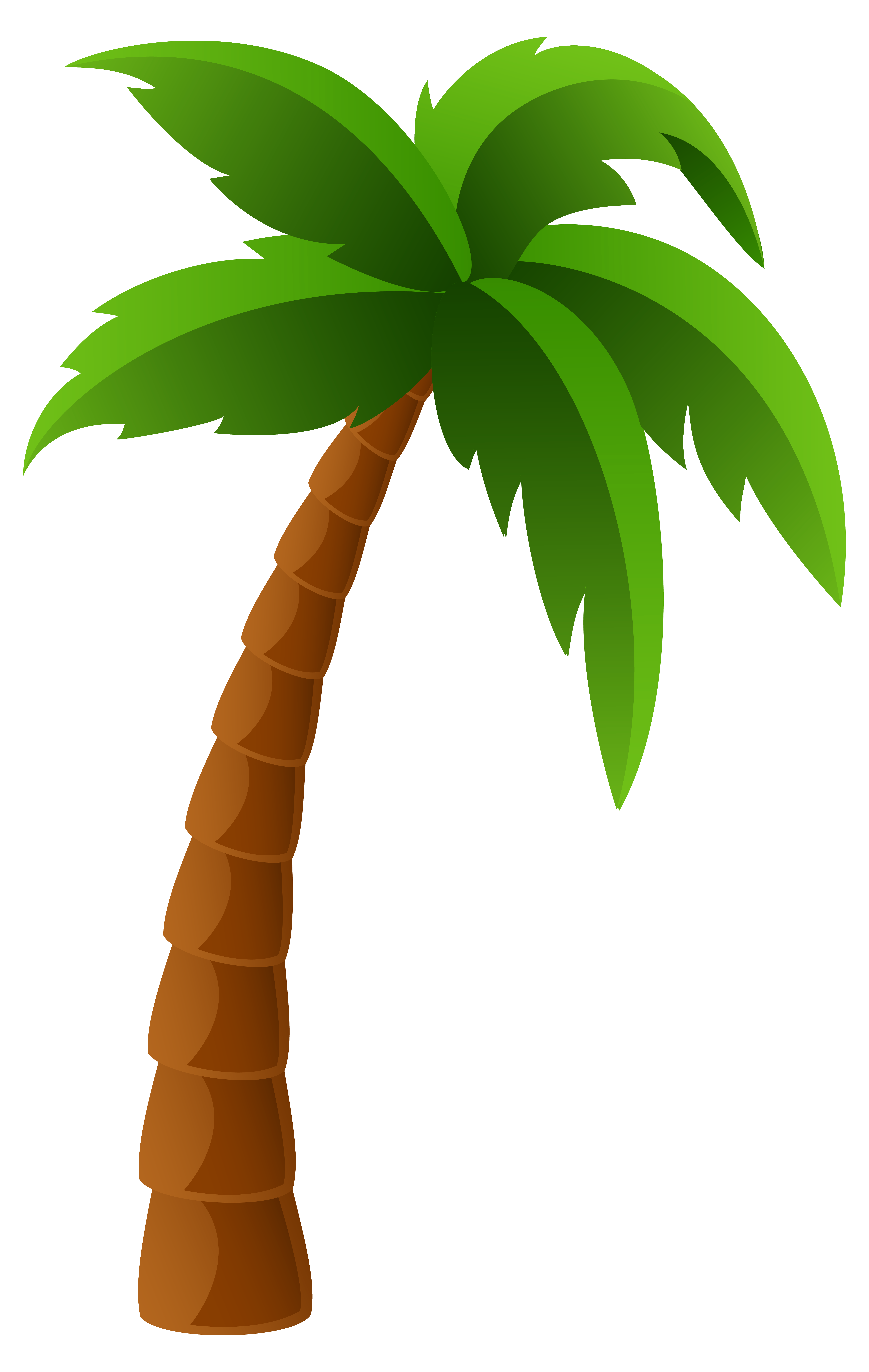 Palm tree png.