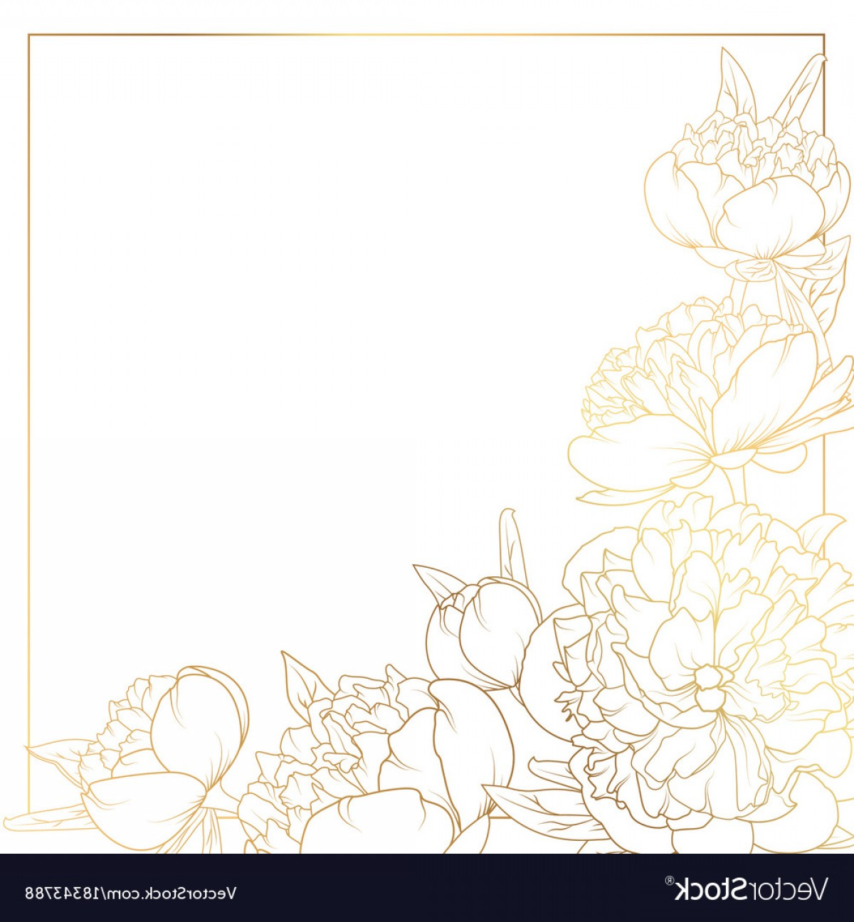Rose peony flowers.