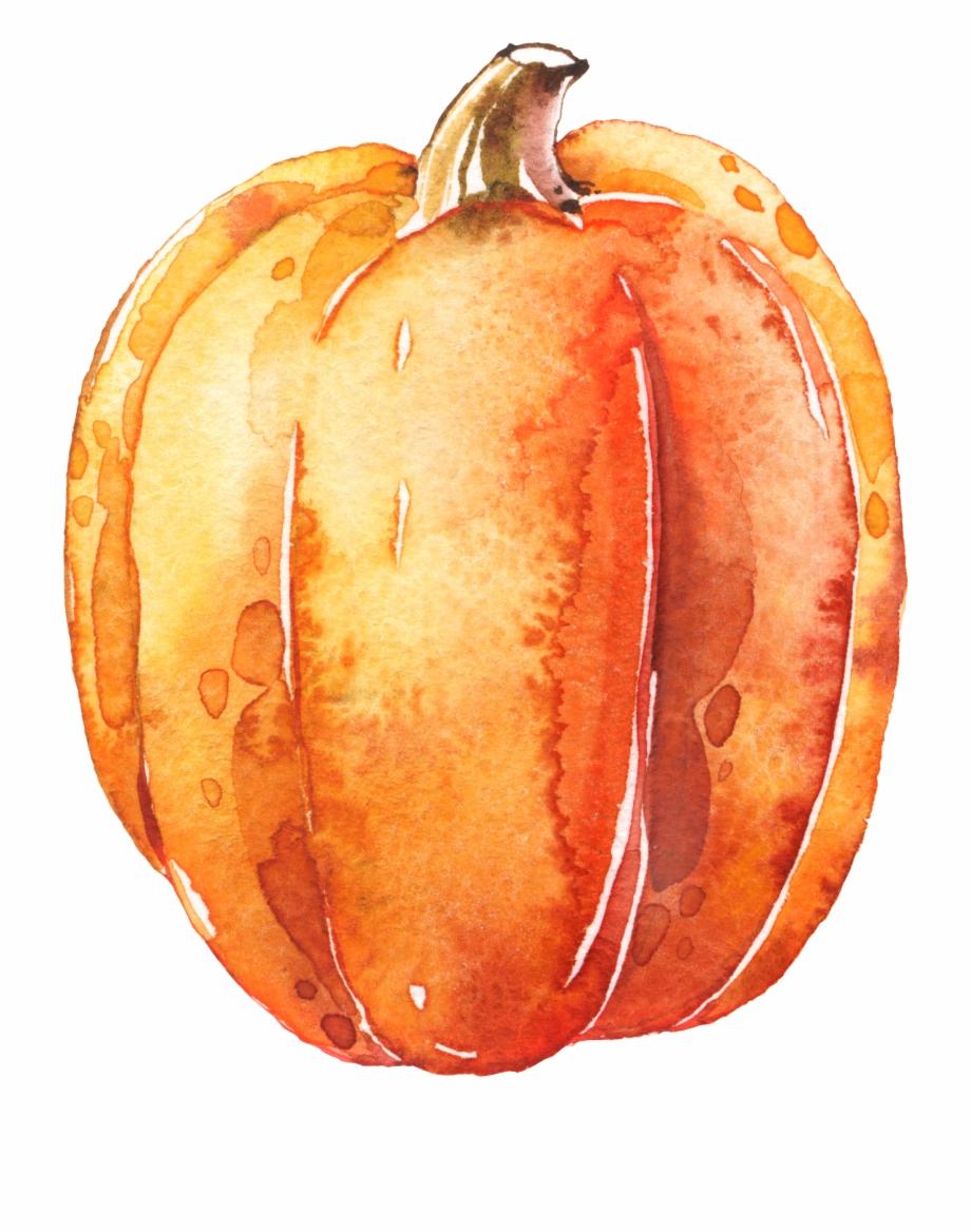 Watercolor pumpkins png.