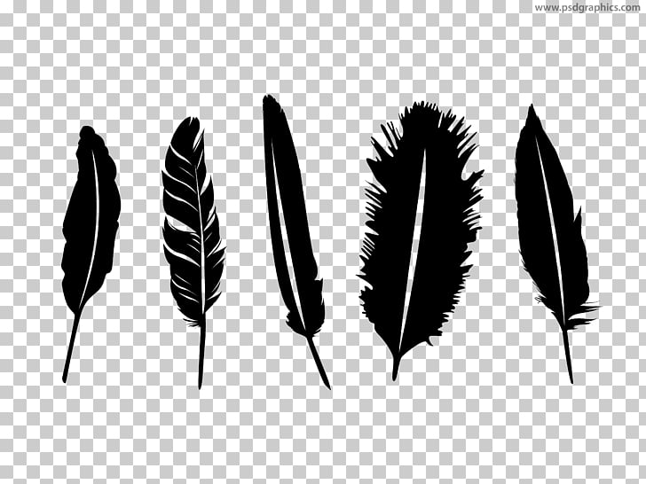 Feather quill silhouette.
