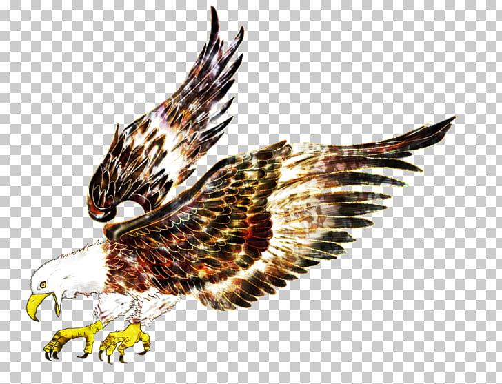 Eagle bird hawk.