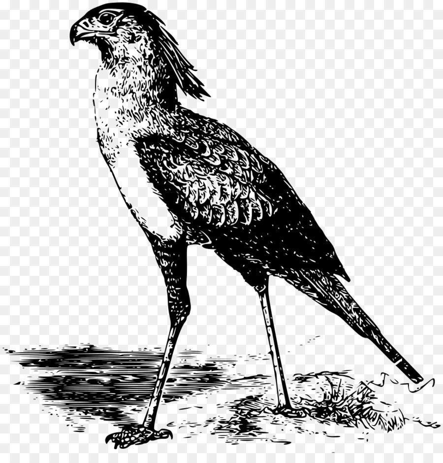 Bird cartoon clipart.