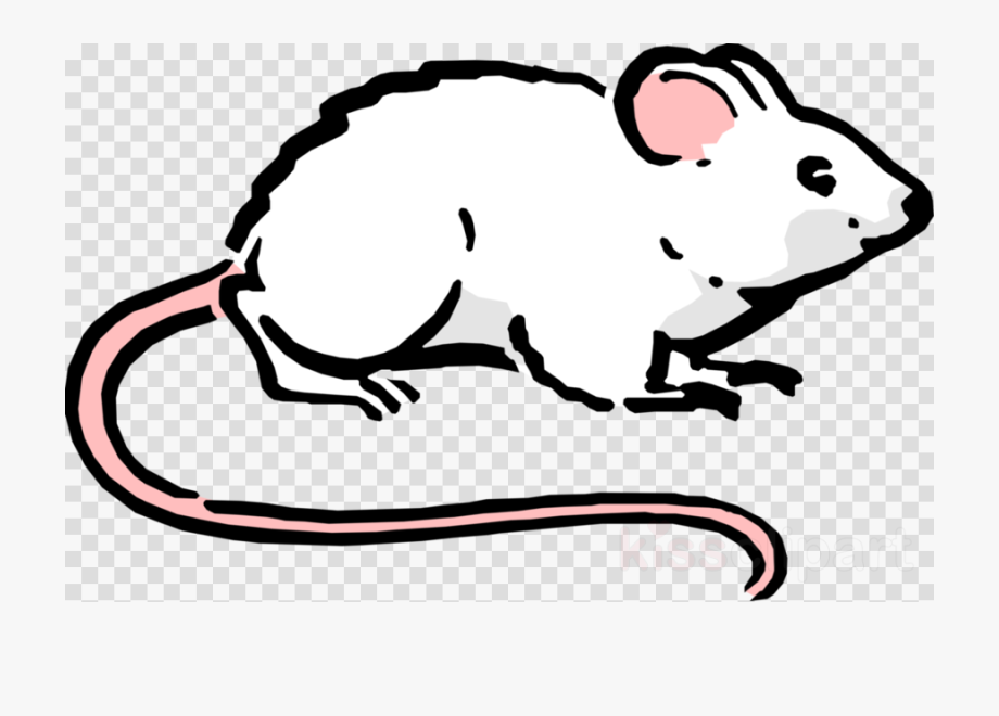 Maus, Rat, Drawing, Transparent Png Image Clipart Free