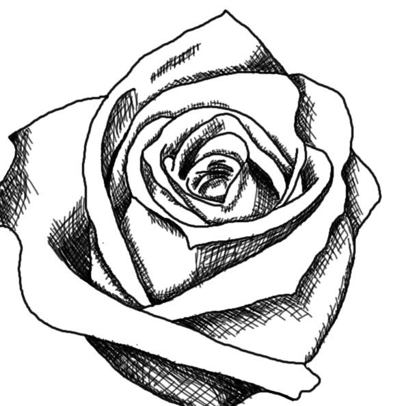 Free rose drawings.