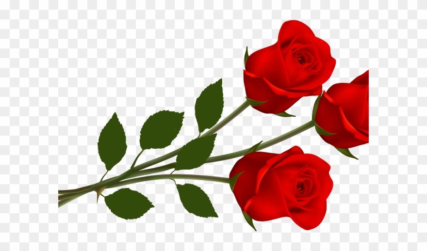 Rose clipart transparent.