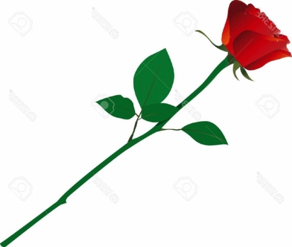 Long stemmed rose.