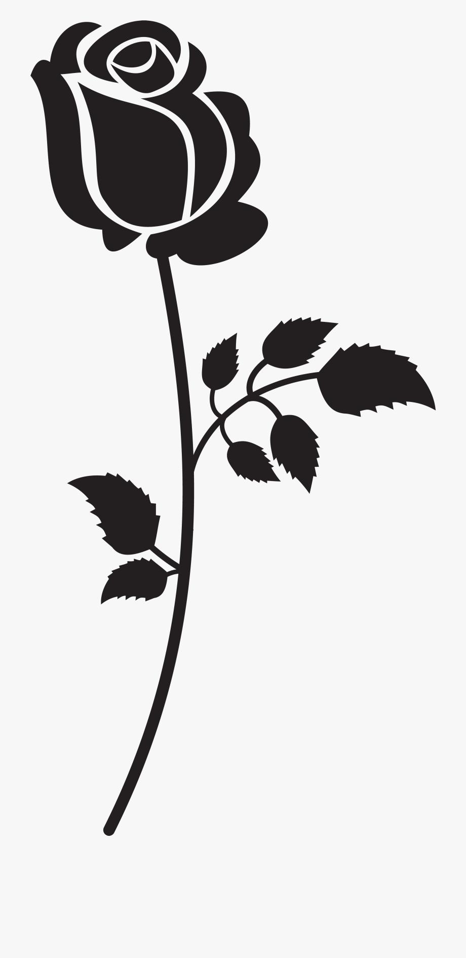 Long stem roses.