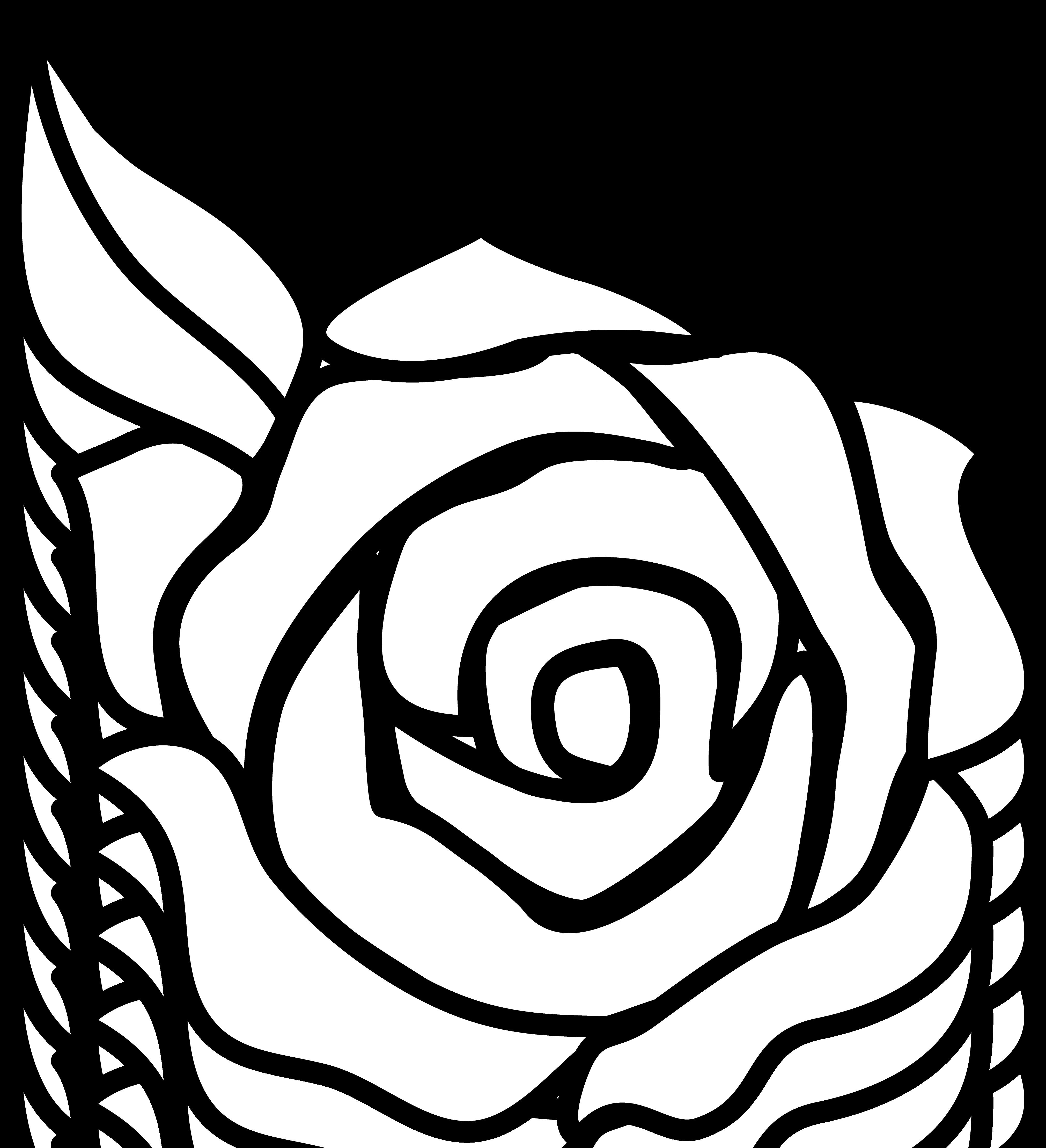 Free rose outline.