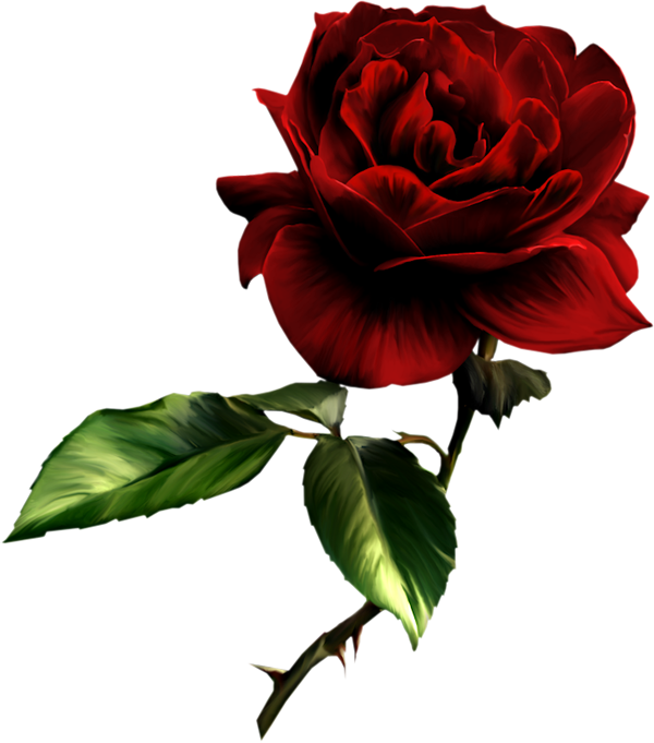 Free roses images.