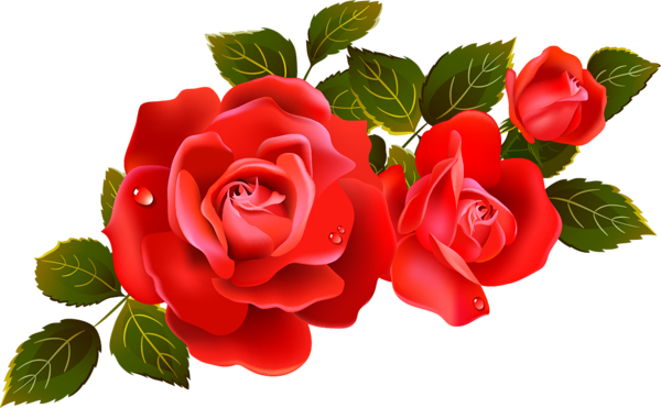 Large red roses.
