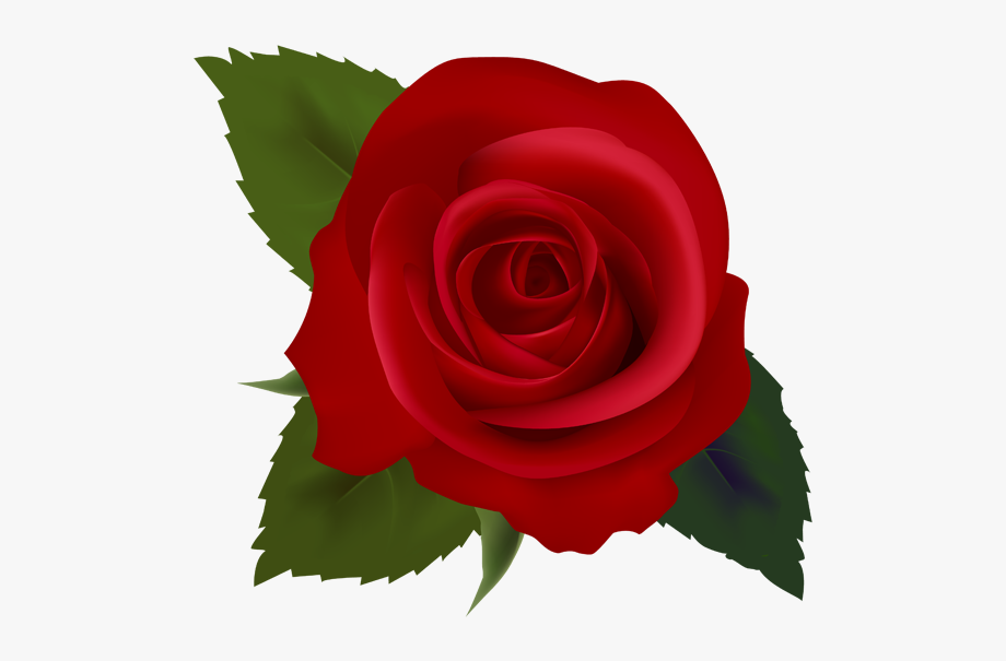 Red roses clip.