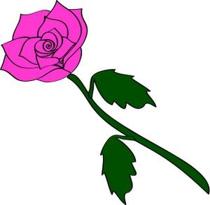 Free single rose.