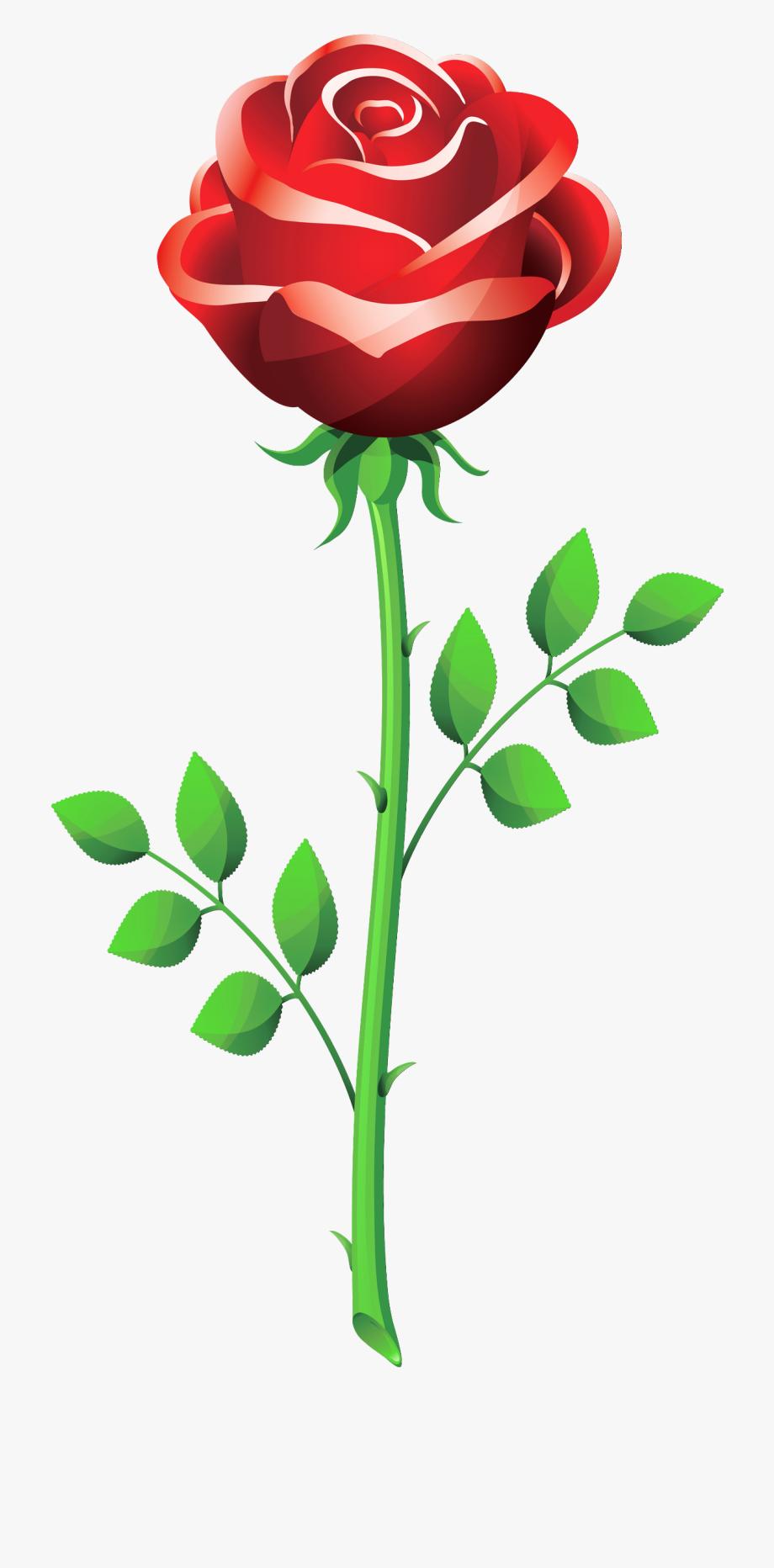 Single pink rose.