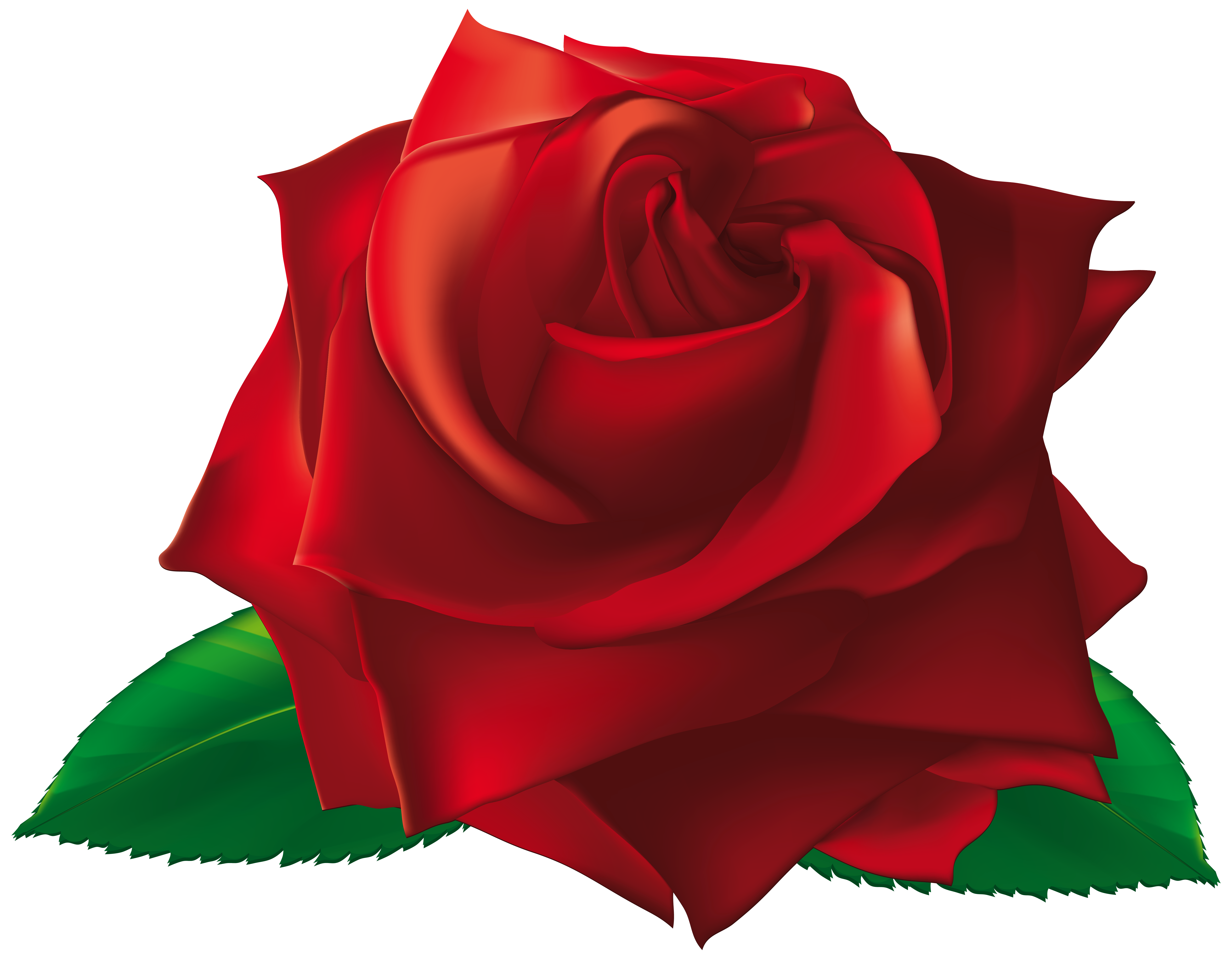 Red single rose.