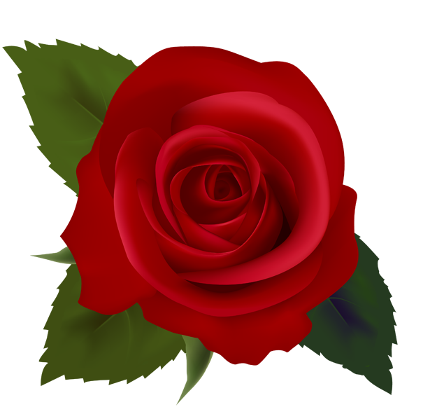 Free small rose.