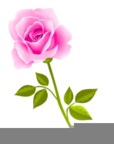 Purple roses clipart.