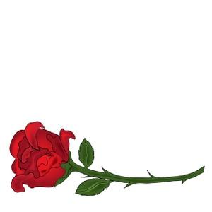Roses long stem.