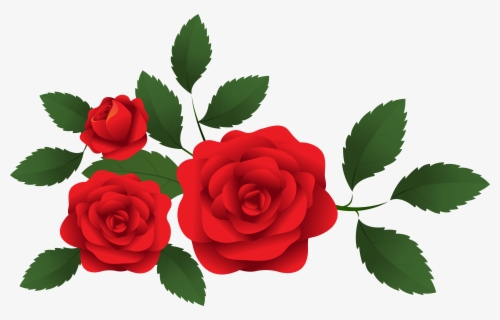 Free red roses.