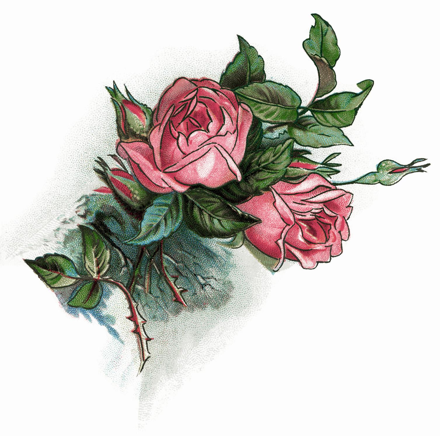 Free victorian rose.