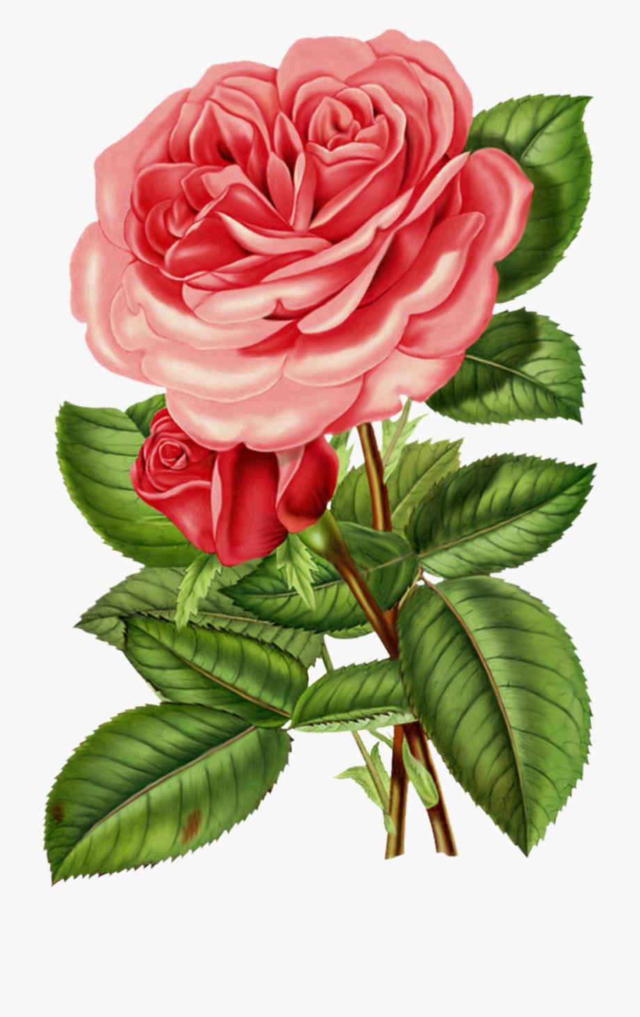 Vintage roses clip.