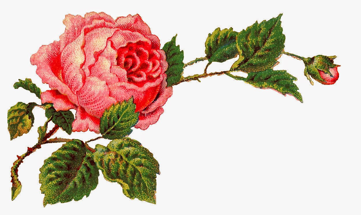 Victorian rose pictures.