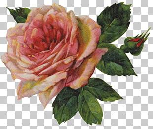 118 victorian rose.