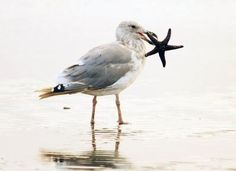 Best seagull images.