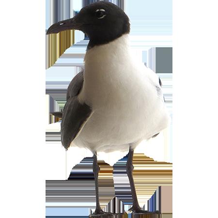 Closeup seagull tightly.
