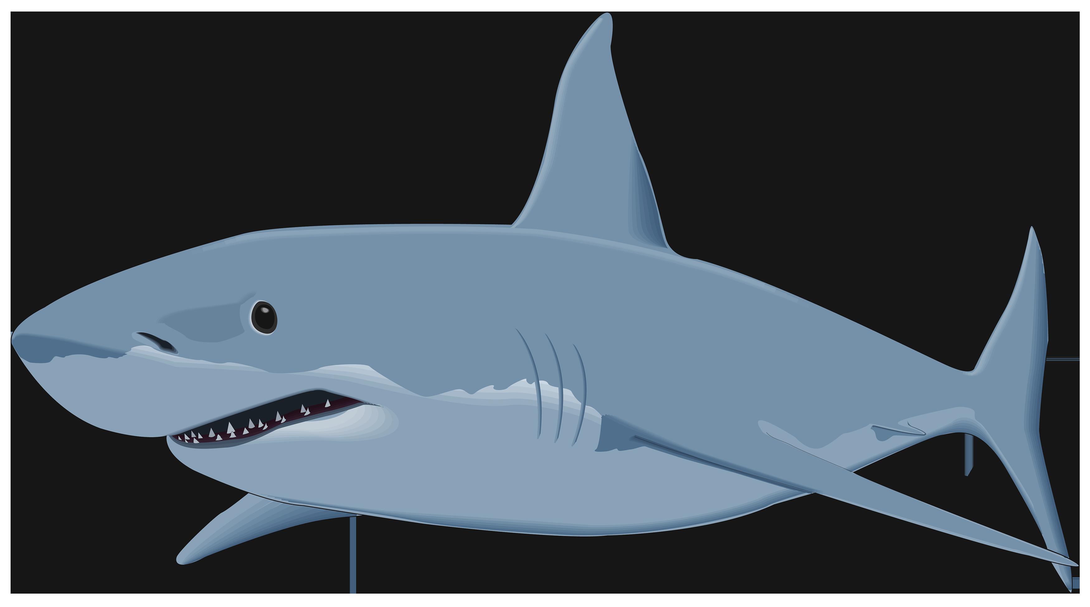 Shark png clipart.