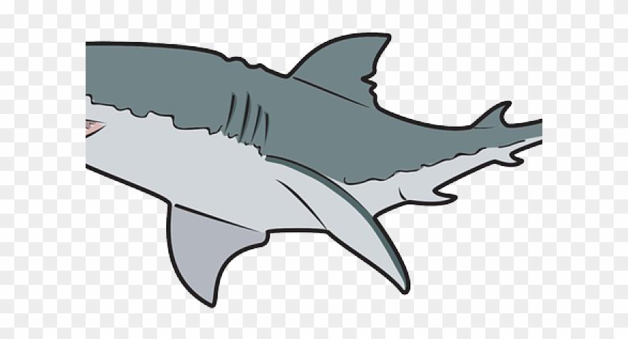 Great white shark.