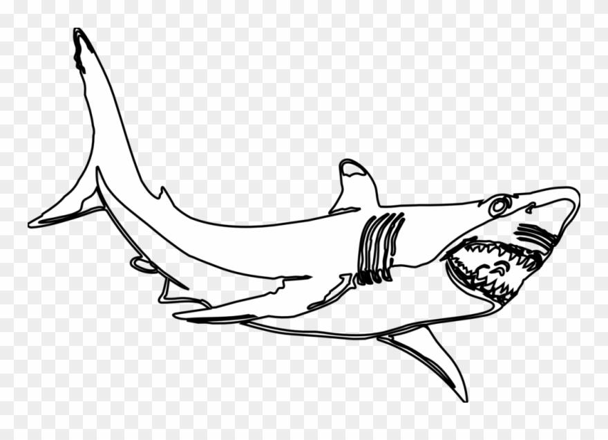 Hammerhead shark template.